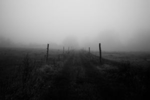 Mist on a path between two paddocks