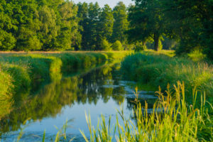 Small river in Luckenwalde in the Summer