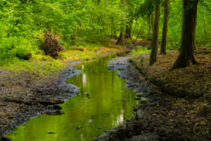 Small river in the forest, almost dried up in the summer in Germany