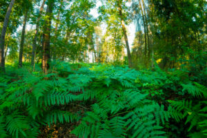 with fern overgrown forest in summer, photographed with a fisheye lens