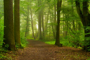 Forest way on a Wet and slightly foggy early Morning in the summer
