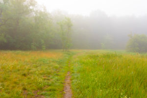 Fog on a Meadow in the early Morning at the edge of the forest