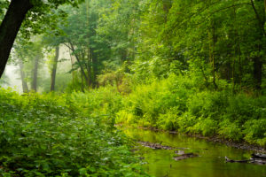 small river in the early morning in the forest in the summer