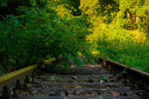 old railway tracks, the are overgrown