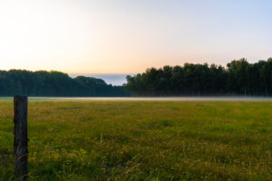 light mist at sunrise in summer on a pasture