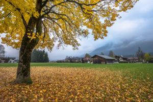 Germany, Bavaria, Garmisch-Partenkirchen, maple tree in autumn