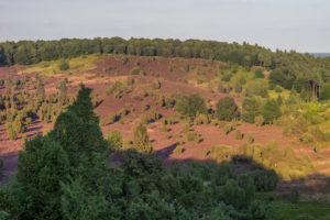 Deutschland, Niedersachsen, Heidekreis, Lüneburger Heide am Abend
