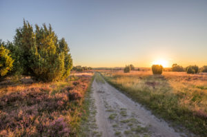 Germany, Lower Saxony, Heidekreis, Lüneburger Heide in the evening