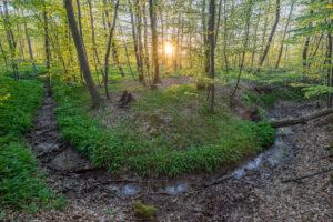 Deutschland, Niedersachsen, Wolfenbüttel, Elm, Bärlauchblüte im Naturpark Elm