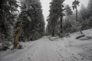 Germany, Saxony-Anhalt, Harz National Park in winter