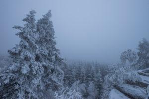 Deutschland, Sachsen-Anhalt, Nationalpark Harz im Winter