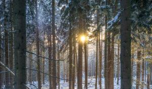 Deutschland, Sachsen-Anhalt, Nationalpark Harz, Nationalpark Harz im Winter