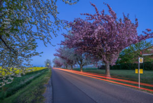 Germany, Thale, Weddersleben, Blossoming cherry trees on the highway, light trails, evening