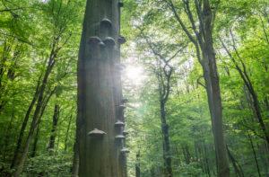 Deutschland, Thüringen, Nationalpark Hainich, Laubbäume im Frühling