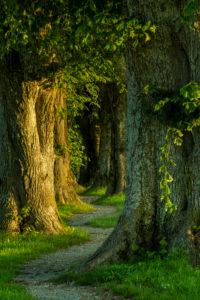 Holzkirchen, Landkreis Miesbach, Oberbayern, Bayern, Deutschland, Europa. Sonnenaufgang am Steindlweg in der Koglallee