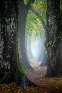 Holzkirchen, Landkreis Miesbach, Oberbayern, Bayern, Deutschland, Europa, Herbstnebel am Steindlweg in der Koglallee
