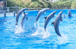 Dolphins show, Oceanographic, City of Arts and Sciences, Valencia, Comunidad Autonoma de Valencia, Spain