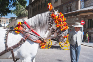 Traditional Spanish horse and Malaga festival participant parading, Malaga, Andalucia , Spain, Europe