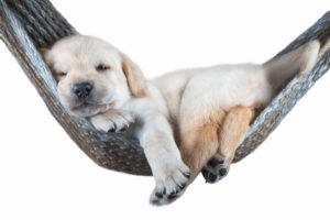 small dog lying in the hammock