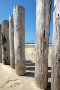 Wooden posts in Holland overlooking the sea