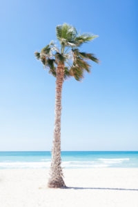 Dubai, palm tree at Jumeirah beach