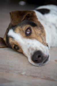 Mongrel dog, portrait