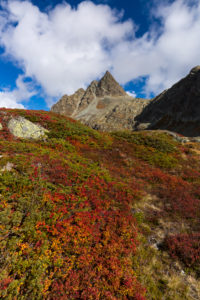 Autumn at the Albula Pass, canton of Grisons, Switzerland, Colourful bilberry shrubs