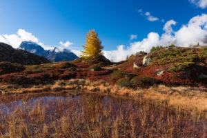 Autumn at 2300 meters above sea level at the Crap Alv Lajets on the Albula Pass, canton of Grisons, Switzerland,