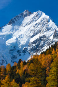 Two seasons seem to clash in the Morteratschtal (valley) near Pontresina at the foot of the Piz Bernina, canton of Grisons, Switzerland,