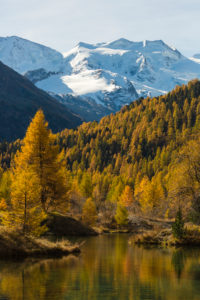The Golden October shows at Pontresina from the most beautiful side, view of the Bellavista, canton of Grisons, Switzerland