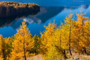 A perfect autumn day in the middle of Golden October over Lake Sils in the Engadin, canton of Grisons, Switzerland