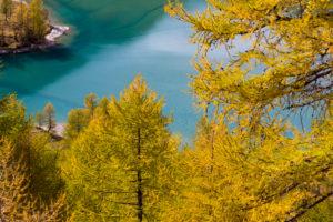 Autumn on the Alp Grüm near Poschiavo, canton of Grisons, Switzerland