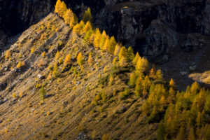 Light and shade determine the autumnal landscape on Lake Palü in the Alp Grüm, canton of Grisons, Switzerland
