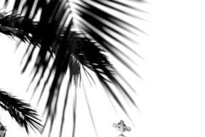 Palm leaves, cross, b/w,