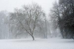 Schneetreiben im Park, Schneefall