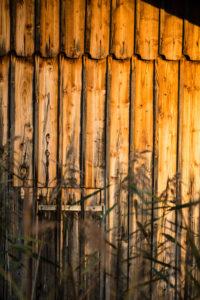 Herbststimmung am See, Schilf vor Scheune, Detail