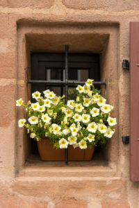 Window, flower box, petunia, Nuremberg, Franconia,