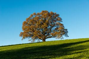 Baum im Herbst, Bayern