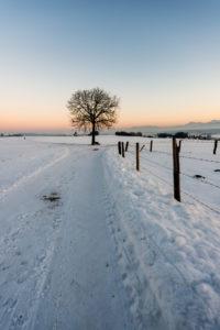 Winterlandschaft mit Baum und Schnee