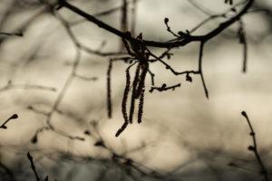 Baum, Zweige, winterlich, Frühlingsanfang, Stimmung am See, Bayern, Landschaft, Natur