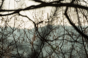 Tree, branches, wintry, early spring, mood at the lake, Bavaria, landscape, nature