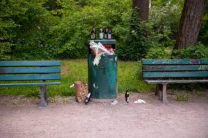 Abfall im Park, Mülleimer