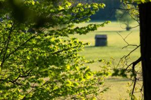 Frühlingslandschaft, Zweige, Blätter, Bayern, Oberbayern