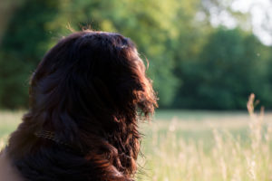 Frühlingswiese, Hundekopf von hinten,