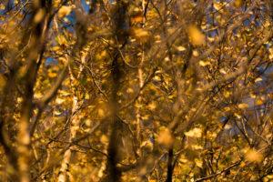 Herbst, Herbstlaub