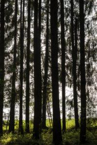 Wald in Bayern