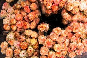 Blumen im Frühling, Blumenhändler, Blumenmarkt