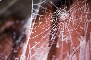 Spinnennetz mit Raureif an einem Schuppen