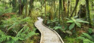 Rain forest, way, footbridge, Ship Creek, west Coast, south Island, New Zealand