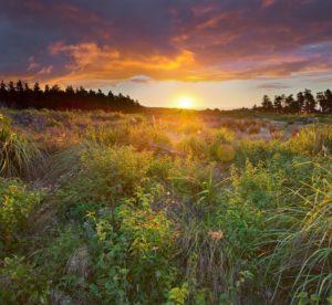 Sonnenuntergang, Wiese, Manawatu-Wanganui, Nordinsel, Neuseeland